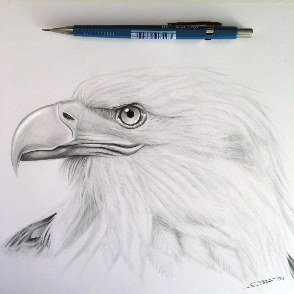 eagle how to draw frame