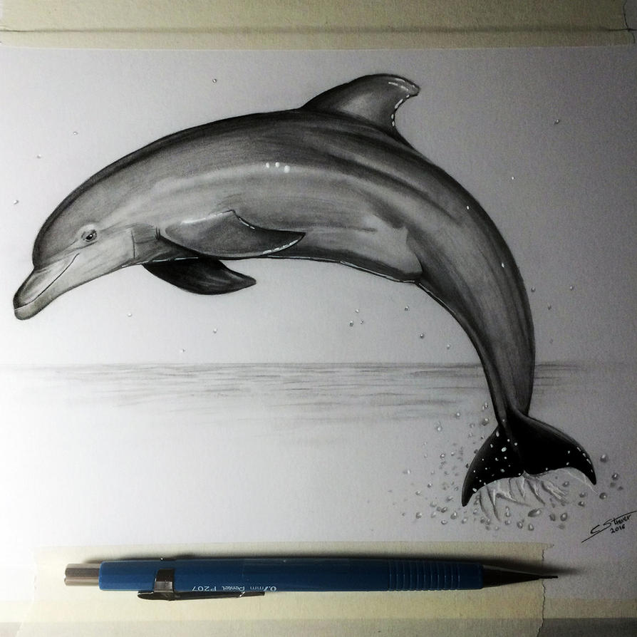 Dolphin drawing study by lethalchris on deviantart dolphin drawing study by lethalchris thecheapjerseys Choice Image