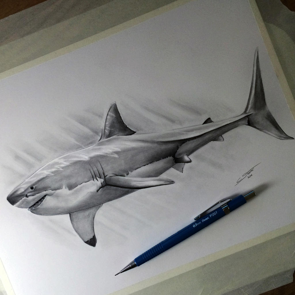 traditional shark drawing