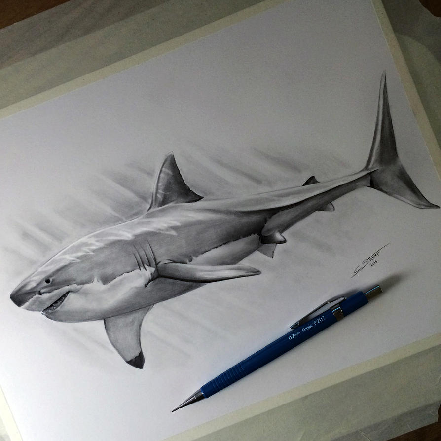 Tiger Shark Drawing In Pencil
