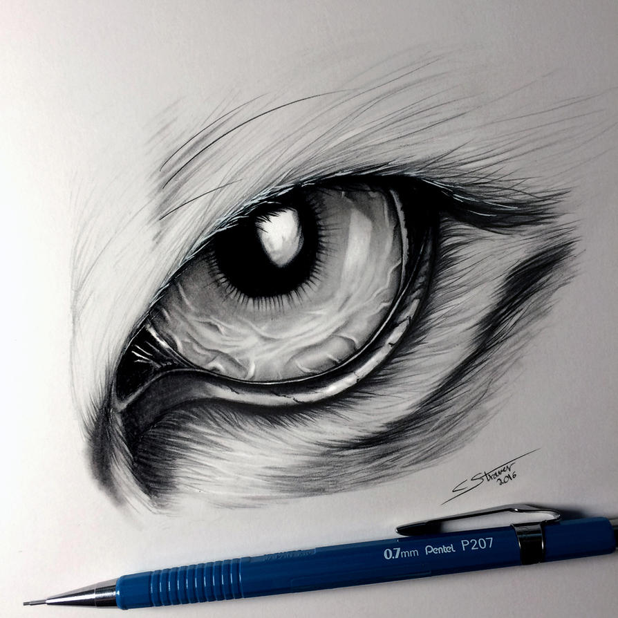 Tiger Eye Drawing By LethalChris On DeviantArt