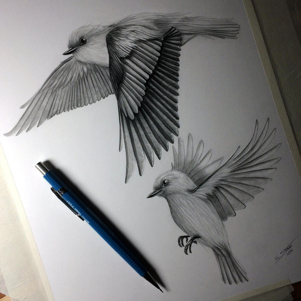 This is a picture of Gratifying Birds Flying Drawing