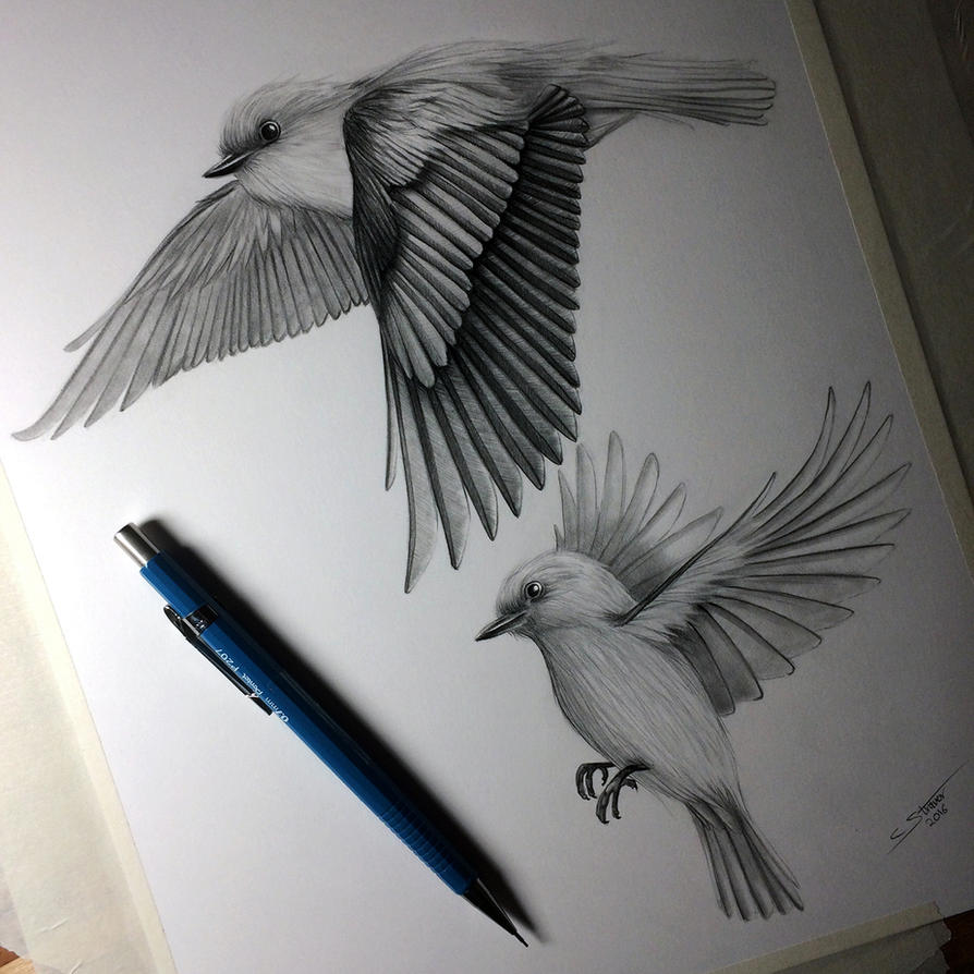 Birds Flying - Drawing Study By LethalChris On DeviantArt