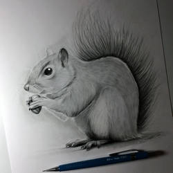 Squirrel Drawing by LethalChris