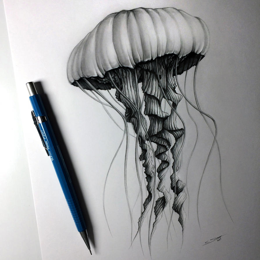This is a graphic of Handy Jellyfish Ink Drawing