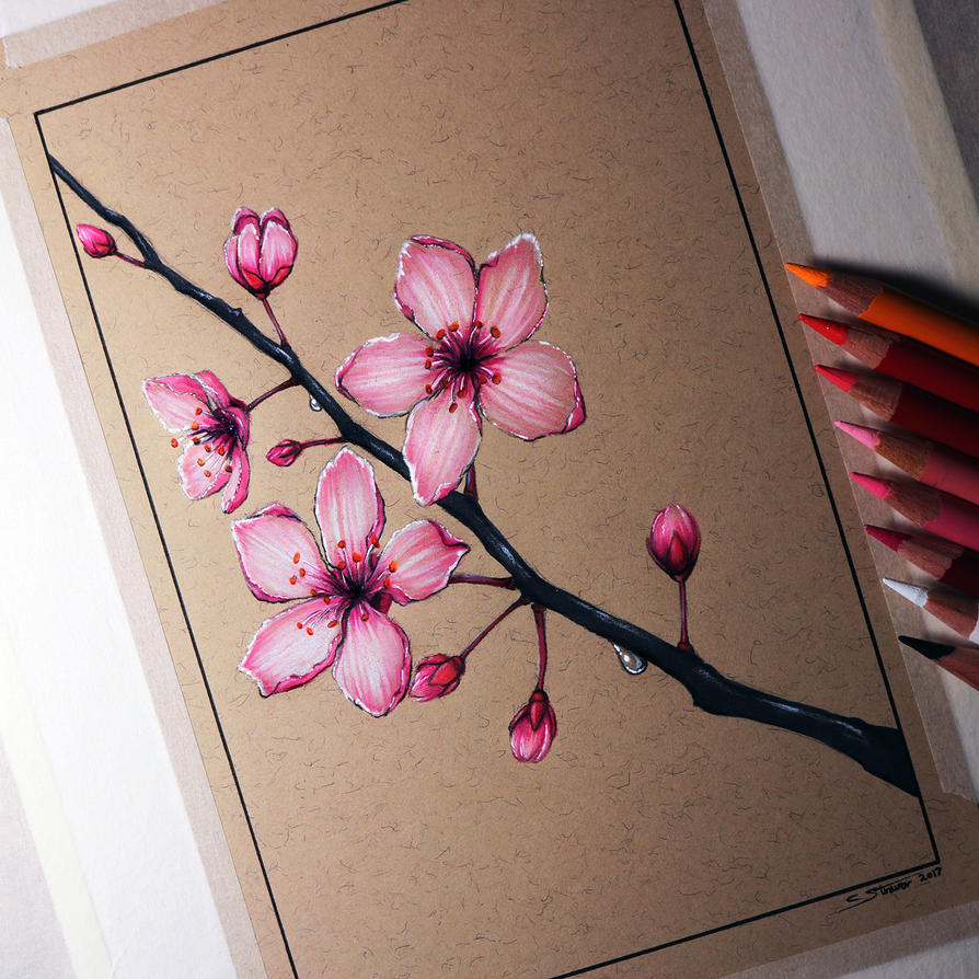 Blossom Tree Drawing: Cherry Blossom Drawing By LethalChris On DeviantArt