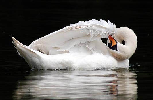 Vertigo swan