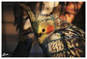 Punk Bird by sllim