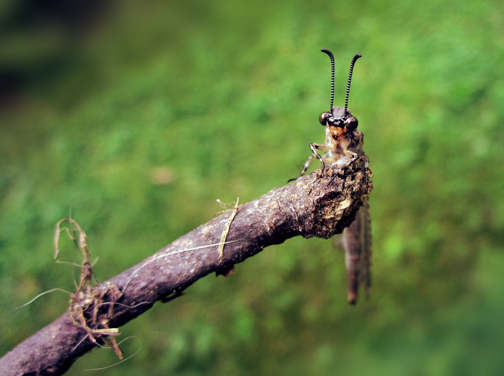 Twiddle bug by Celebi-Yoshi