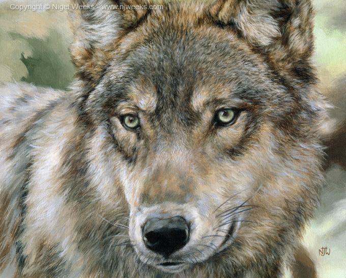 Wolf by Crynyd
