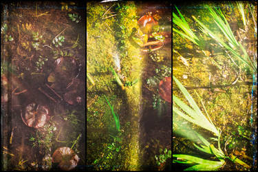 Lichen by Sun-Bliss