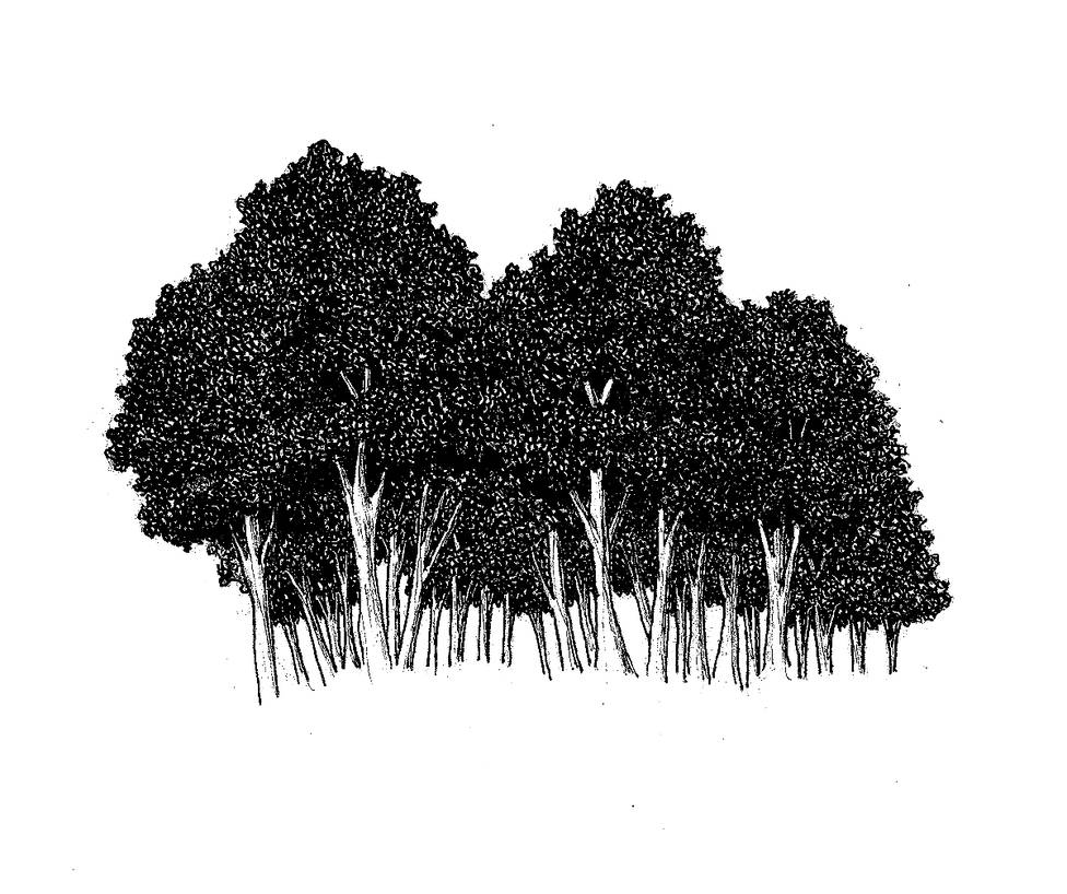 Random Tree 2 by Brant-Bi
