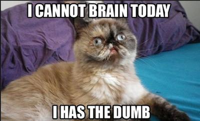 Cat Meme by Zekromkitty133