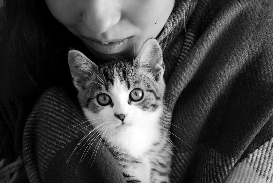 Lady with a Cat by Darlenee