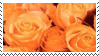 orange roses aesthetic stamp by hematology