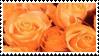 orange roses aesthetic stamp by hematology