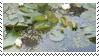pond aesthetic stamp by hematology