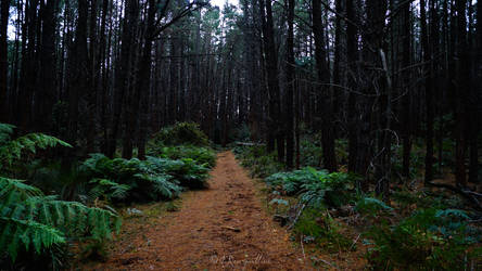 Day 5 - Into The Forest I Go...