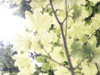 illuminated leaves by Kerblotto