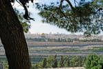 Temple Mt from Mt of Olives