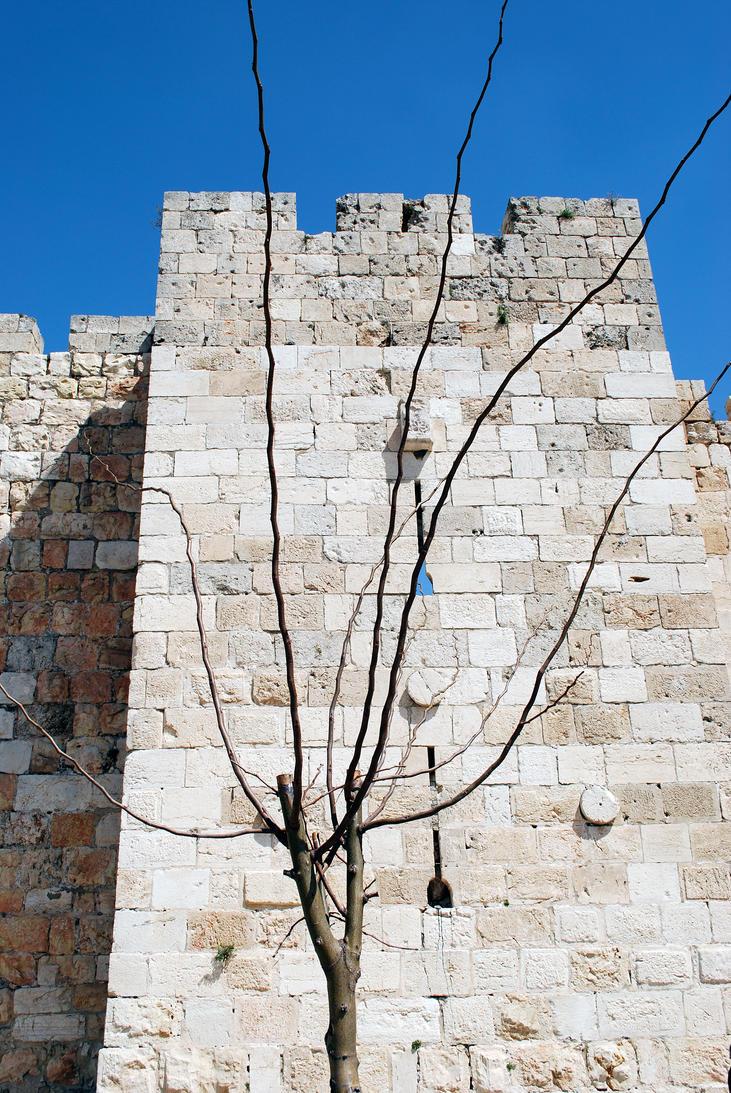 Near the Jaffa Gate, Jerusalem by dpt56