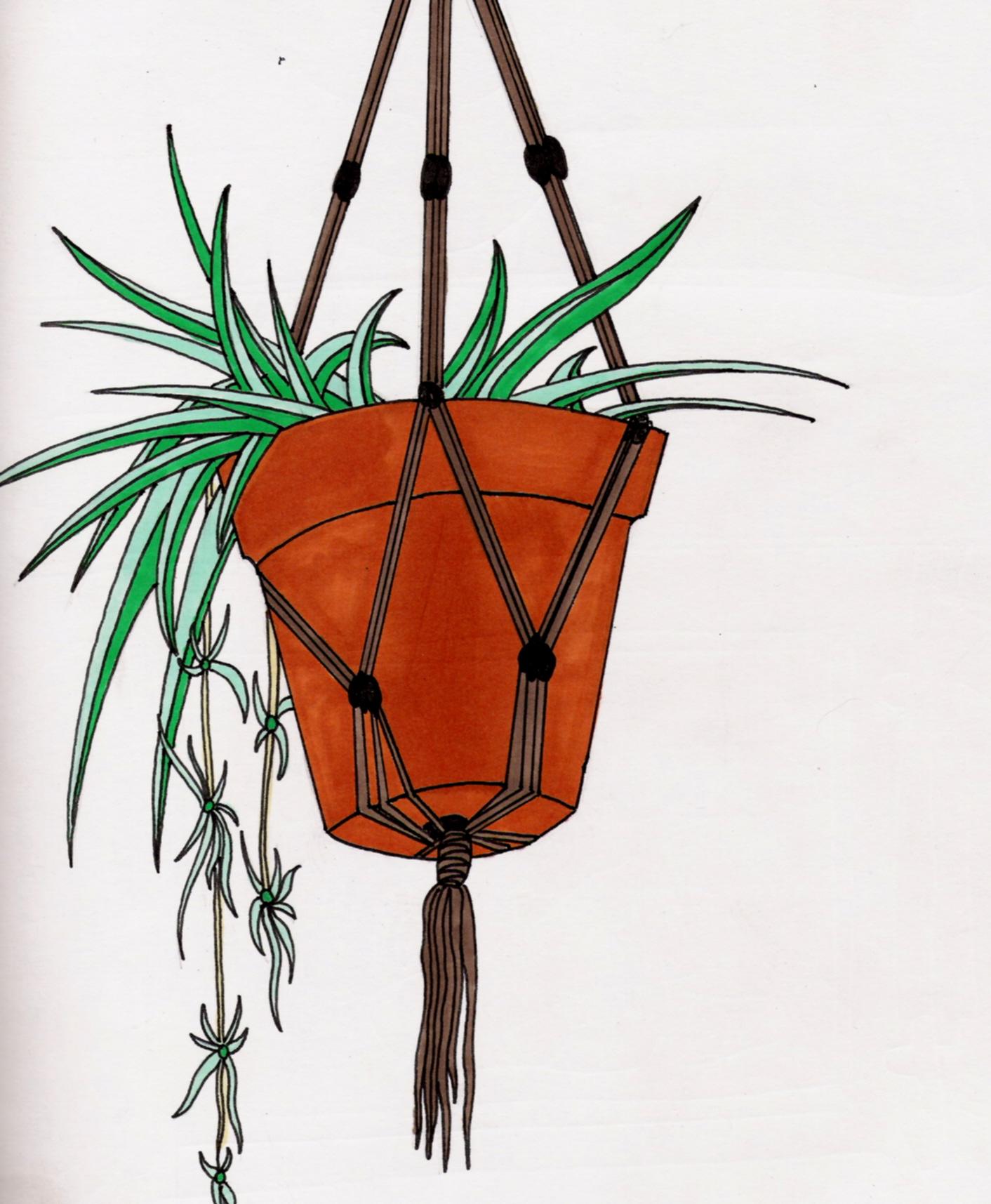 Spider Plant By Drecula On Deviantart