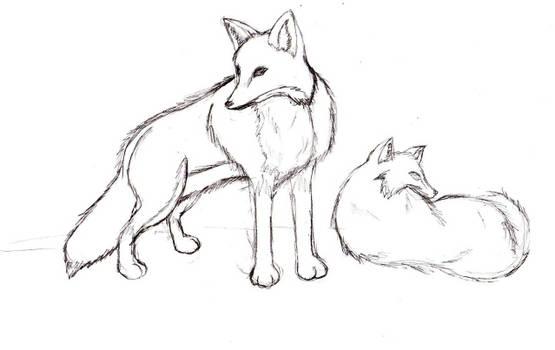 Fox drawing previous