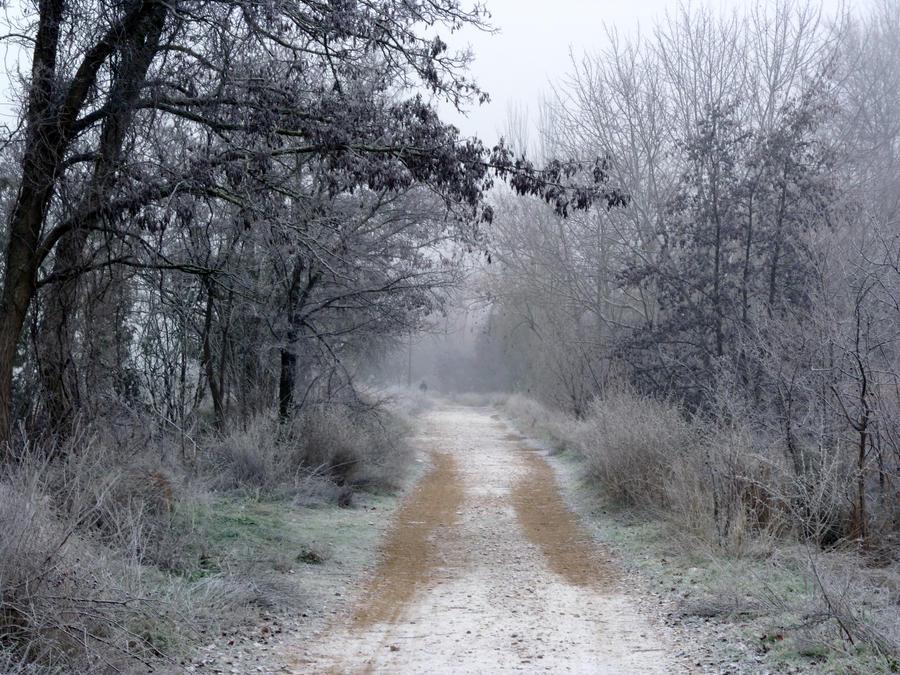 Helada invernal by anakinpedro