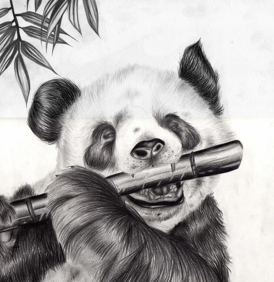 Baby pandas eating bamboo drawing