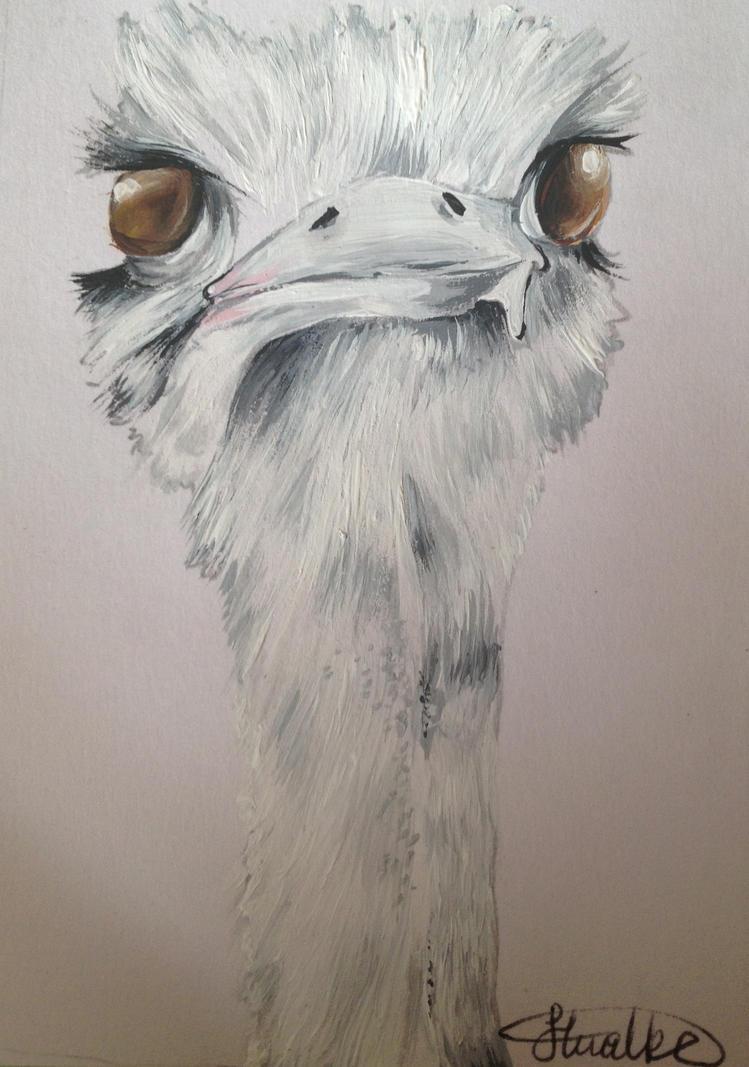 Ostrich by xCh3rryx