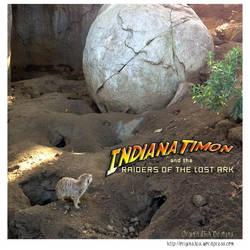 Indiana Timone