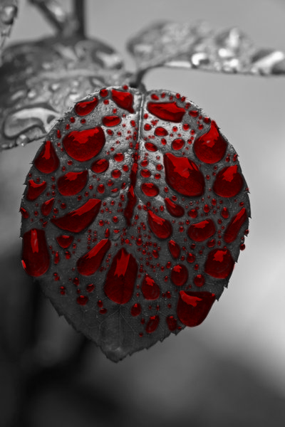 Blood Leaf, Manip by TonistL