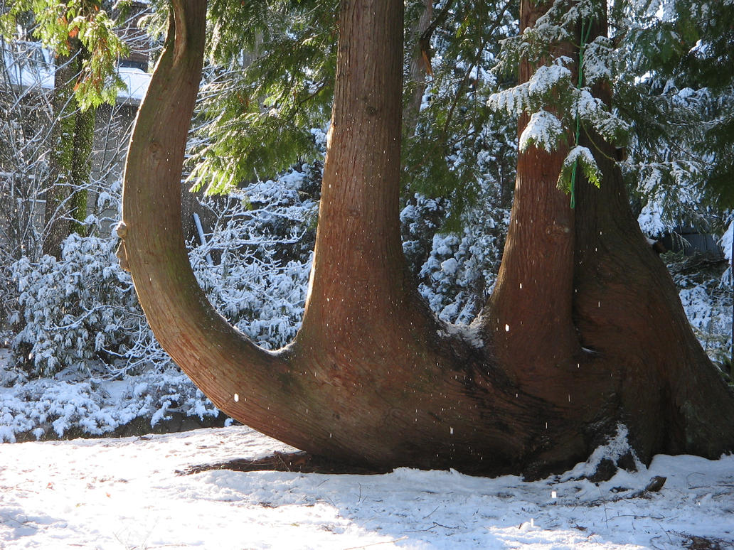 Camels That Live In Snow Camel Tree In The Snow By Pangamma