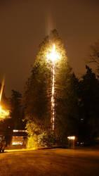 Tree on fire