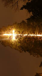 tree lit up