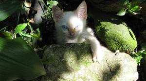 Little Cat in the Garden by dragaodepapel