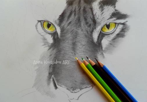 Tiger WIP