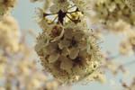 Bouquet Blossom