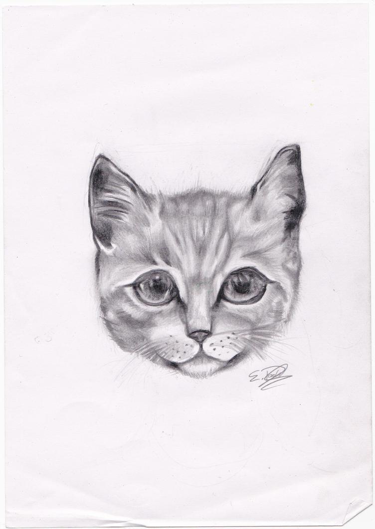 Cat by DarkUmbreon12