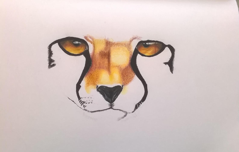 cheetah WIP by DarkUmbreon12