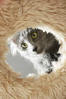 hide and seek by IceCreamHabit