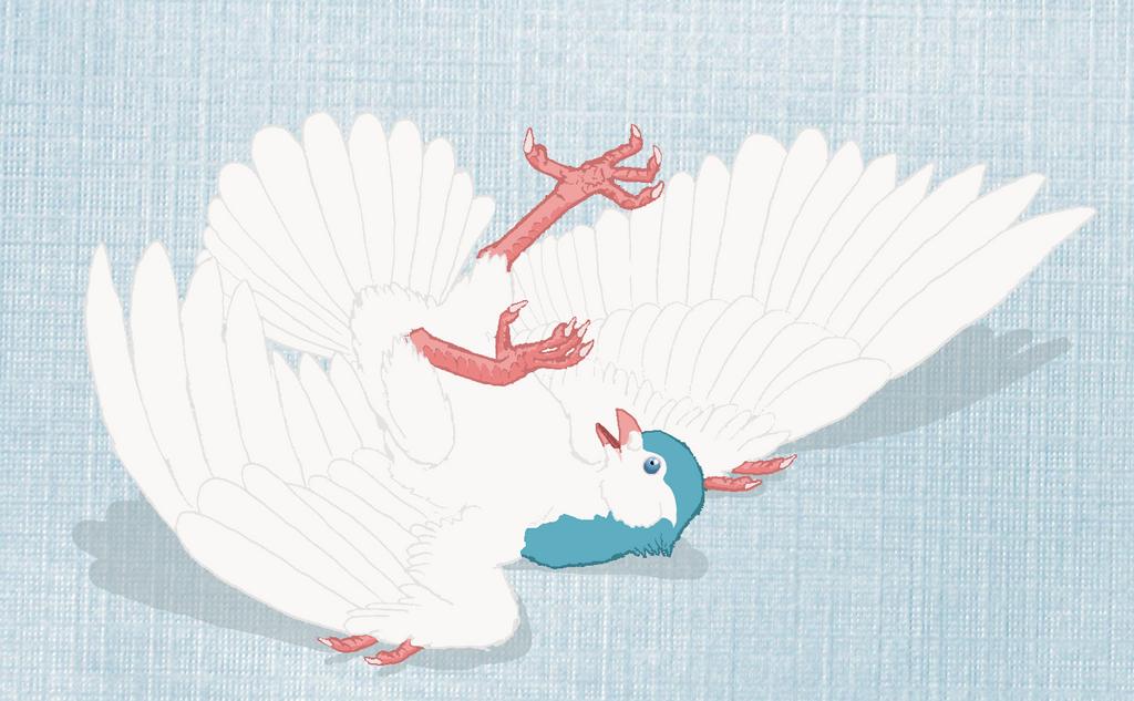 Dazed Dove by Joysweeper