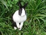 Taylor the Rabbit #4
