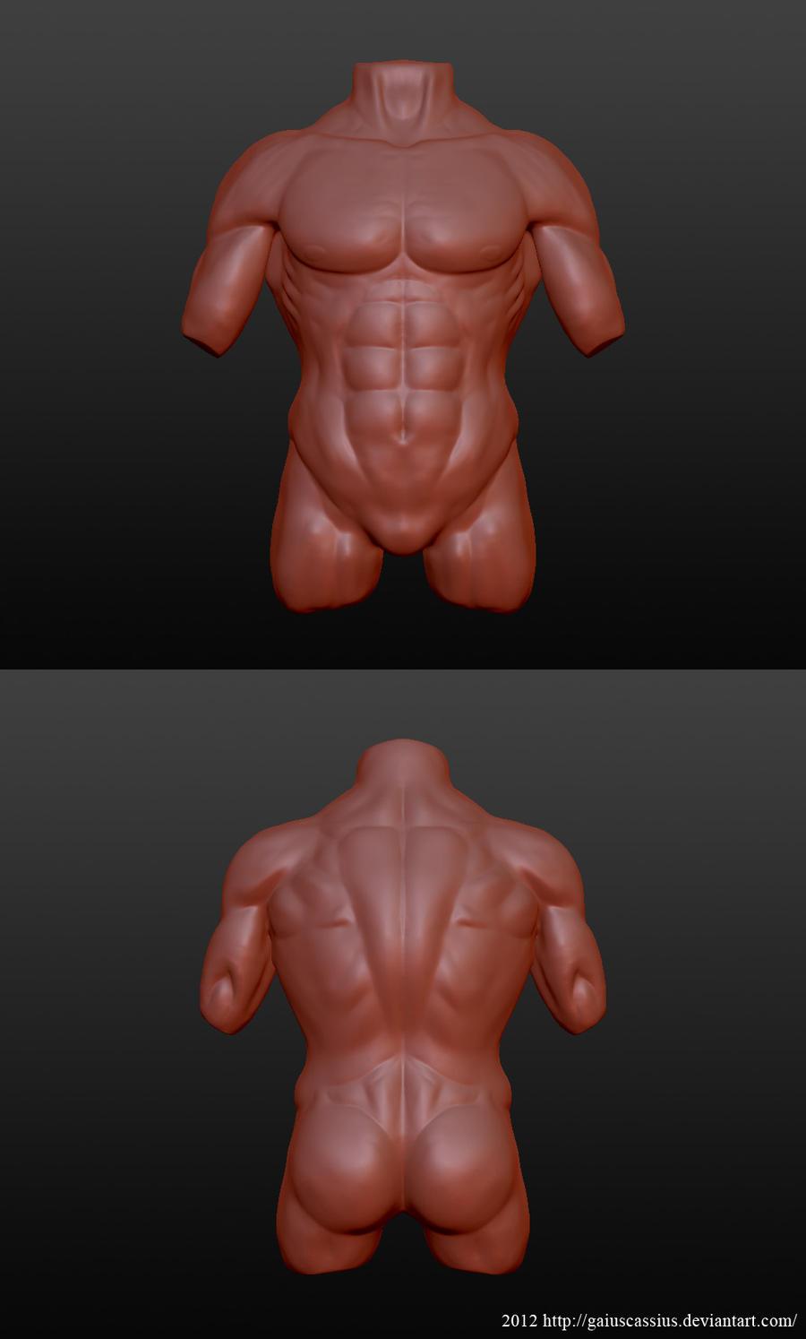 Anatomy study - male torso by CassiusProps on DeviantArt