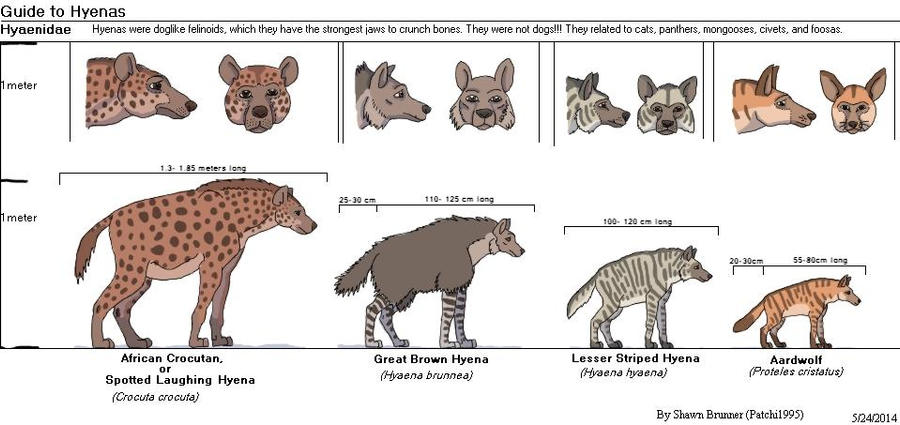 guide to hyenas by patchi1995