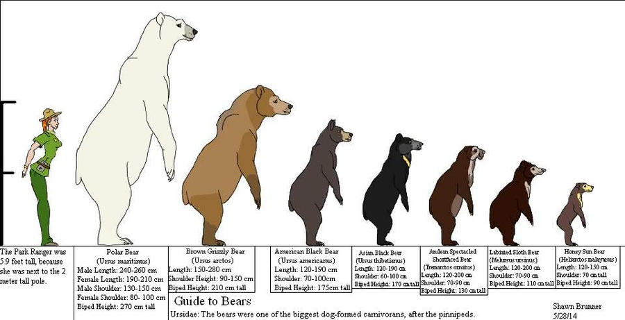 guide_to_bears_by_patchi1995 d7k4toi bear breeds diagram wiring diagram \u2022