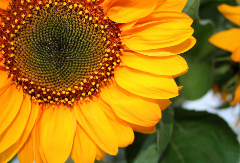 Sunny Flower Day by elolitta