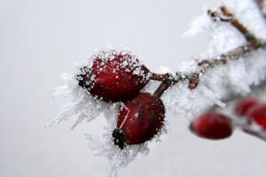 Schneewittchen by elolitta