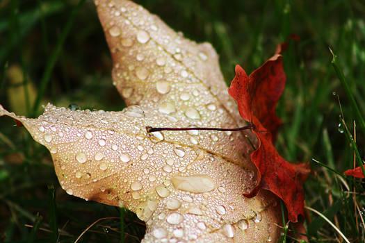 Morning Autumn Dew