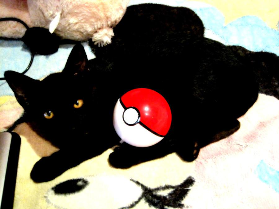 the black cat ... a pokemon? by ZieNpray on DeviantArt